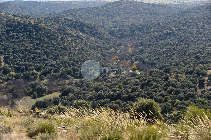Encinar (Quercus ilex). Valle del Río Torcón. San Martín de Montalban. Montes de Toledo. Toledo