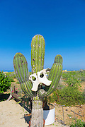 cactus, Todos Santos, Baja, Mexico