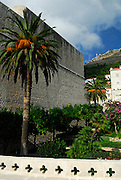 Section of city walls, decorative carvings on bridge and palm tree, near Vrata od Ploca entrance, Dubrovnik old town, Croatia