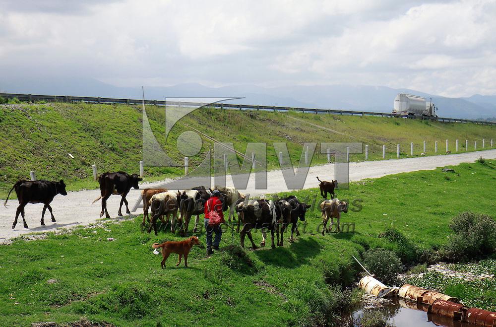 Toluca, México.- Habitantes del Cerrillo Vista Hermosa que sobreviven del cuidado de animales como las vacas, recorren la orilla del río Lerma  para que puedan alimentarse del pasto que crece a los costados de su caudal. Agencia MVT / Crisanta Espinosa