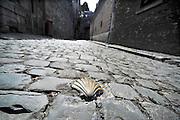 Belgie, Huy, 13-4-2013Als onderdeel van de pelgrimsroute naar Santiago de Compostella ligt in deze straat de Jacobsschelp ingelegd. Symbool van de pelgrimstocht.Foto: Flip Franssen/Hollandse Hoogte