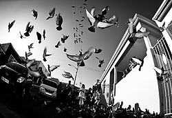 Dec 14, 2012 - Cape Town, Western Cape, South Africa - Feeding pigeons on a Sunday afternoon in the Bo-Kaap. (Credit Image: © Jac Kritzinger/ZUMAPRESS.com)