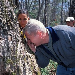 Kibby Township, ME. Manomet scientist helps his field crew identify moss and lichen species indicative of a late successional hardwood forest.