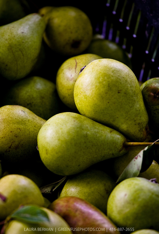 Locally grown food: freshly harvested Bartlett pears at a farmers' market.