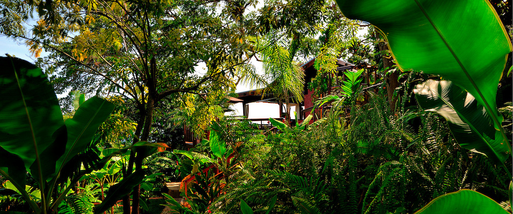 Jungle, GeeJams, Port Antonio, Panorama, Gardens, Jamaica, 2009, Travel, Tourism