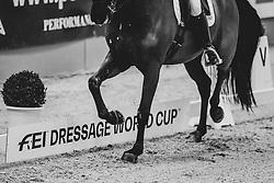 Schneider Dorothee, GER, Sammy Davis Jr<br /> Grand Prix de Dressage CDI-W<br /> FEI Dressage World Cup<br /> Neumünster - VR Classics 2019<br /> © Hippo Foto - Stefan Lafrentz