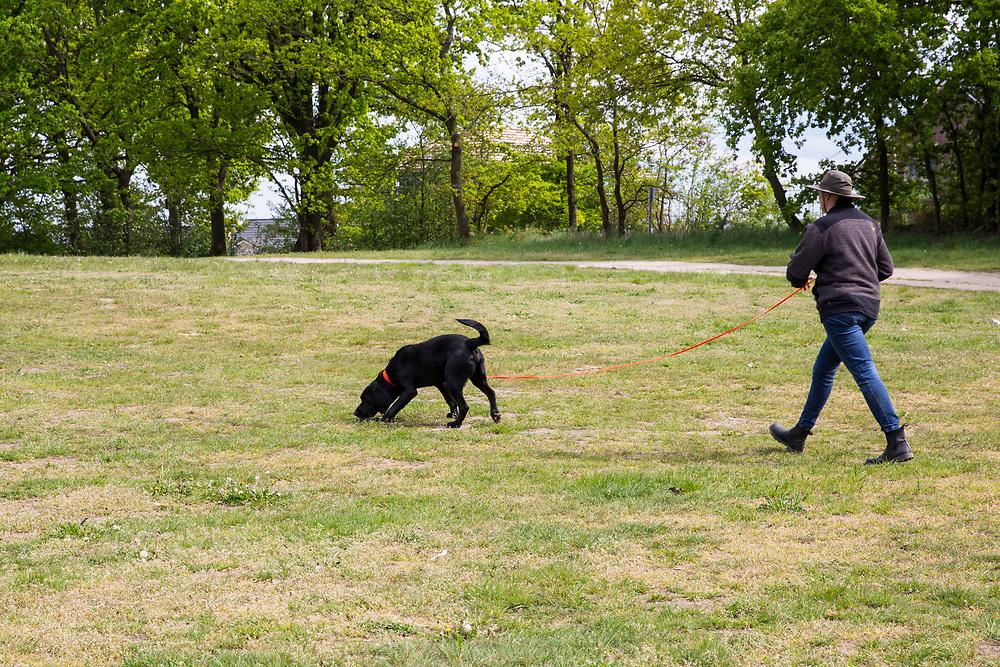 Diplom-Biologin und Hundetrainerin Uta Kielau bildet ihren Wolfsspürhund Scott aus