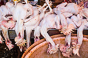 "03 OCTOBER 2012 - BANGKOK, THAILAND:     Freshly killed chickens for sale in Khlong Toey Market in Bangkok. Khlong Toey (also called Khlong Toei) Market is one of the largest ""wet markets"" in Thailand. Thousands of people shop in the sprawling market for fresh fruits and vegetables as well meat, fish and poultry every day.        PHOTO BY JACK KURTZ"