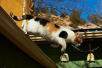 """Cat Jumping off Roof for Breakfast. Elderhostel """"Southwest Photography"""" Workshop Day 2. Kelly Place Cortez Colorado. Image taken with a Nikon D3 and 85 mm f/1.4D lens (ISO 200,  f/8, 1/1000 sec)"""