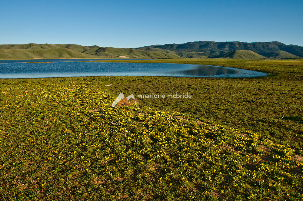 Yellow flowers blanket the ground along the Little Camas Reservoir during spring near Fairfield, Idaho.