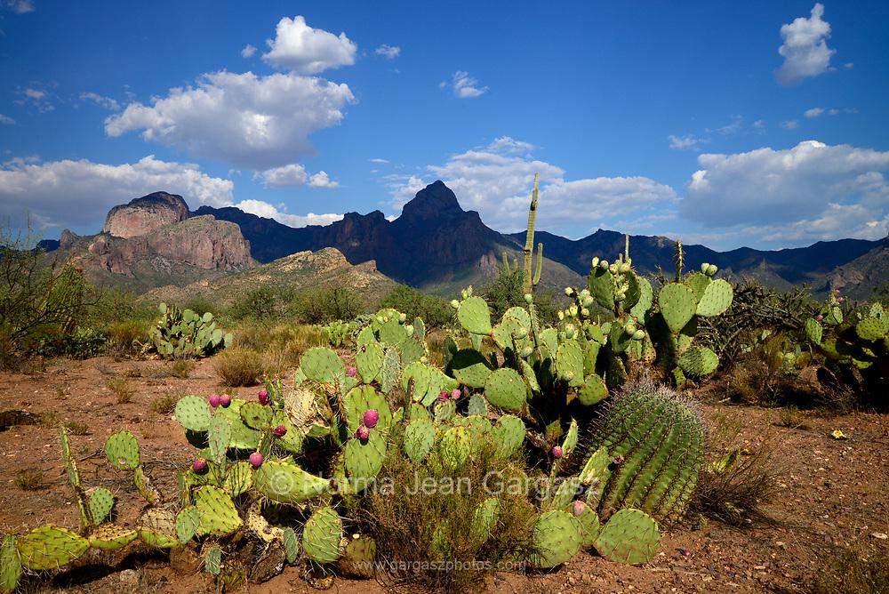 Baboquivari Peak, Baboquivari Mountains, Sonoran Desert, Tohono O'odham Reserrvation, southeast of Sells, Arizona, USA.
