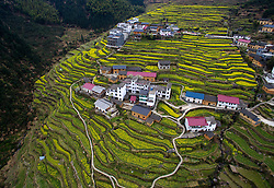 Rape blossoms are seen in the terraced fields in Taihuishan Village of Kaihua County, east China's Zhejiang Province, March 29, 2016. EXPA Pictures © 2016, PhotoCredit: EXPA/ Photoshot/ Huang Zongzhi<br /> <br /> *****ATTENTION - for AUT, SLO, CRO, SRB, BIH, MAZ, SUI only*****