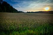 Pojezierze Kaszubskie, krajobraz w okolicy wsi letniskowej Wiele położonej w powiecie kościerskim nad jeziorem Wielewskim.