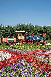 Steam train and flower display at  Miracle Garden the world's biggest flower garden in Dubai United Arab Emirates