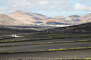 Black volcanic soil vineyard area of La Geria, Lanzarote, Canary Islands, Spain