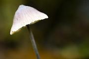 Temperate rainforest fungi