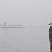 VENICE, ITALY - JANUARY 16: A vaporetto (waterbus) travels slowly under thick fog on January 16, 2011 in Venice, Italy. Transports in the lagoon has been affected by today's fog.  )