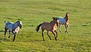 Horses in pasture near Polson Montana