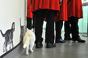 London News pictures. 24.02.2011. Chelsea Pensioners meet the cats at Battersea Dogs and Cats Home. Starting in March, the Chelsea Pensioners will become well acquainted with the dogs and cats at the charity at Battersea Dogs and Cats home, when Battersea walks its dogs across the Thames River to spend time at the Royal Hospital. In turn, the charity will invite the veteran British Army soldiers in to interact with the many animals it takes in every year. Picture Credit should read Stephen Simpson/LNP