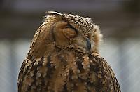 Shut eyes, owl