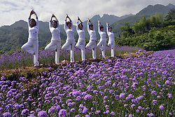 June 4, 2017 - Dexing, Dexing, China - Dexing, CHINA-June 4 2017: (EDITORIAL USE ONLY. CHINA OUT) ..Women practice yoga in vervain field in Dexing, east China's Jiangxi Province, June 4th, 2017. (Credit Image: © SIPA Asia via ZUMA Wire)