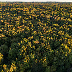 Drone view of  woods (cedar swamp) in Middleborough, Massachusetts.