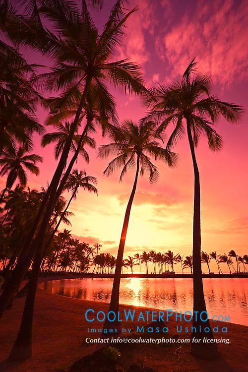 silhouette of coconut palm trees, Cocos nucifera, and Kuualii Anchialine Fishpond, Anaehoomalu Beach at sunset, Waikoloa, Kohala Coast, Big Island, Hawaii, USA, Pacific Ocean