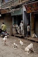 Stray (or feral) dogs in Old Delhi, India. // <br /> <br /> Wilde Hunde in Old Delhi, Indien. //<br /> <br /> Chiens errants, Vieux Delhi, Inde.