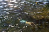Swimming in clear water of Flathead Lake from Wayfarers State Park in Bigfork, Montana, USA