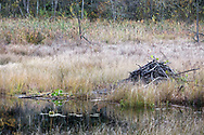 A Beaver Lodge at the Beaver Pond near Hicks Lake.  Photographed from the Beaver Pond Trail in Sasquatch Provincial Park, British Columbia, Canada.