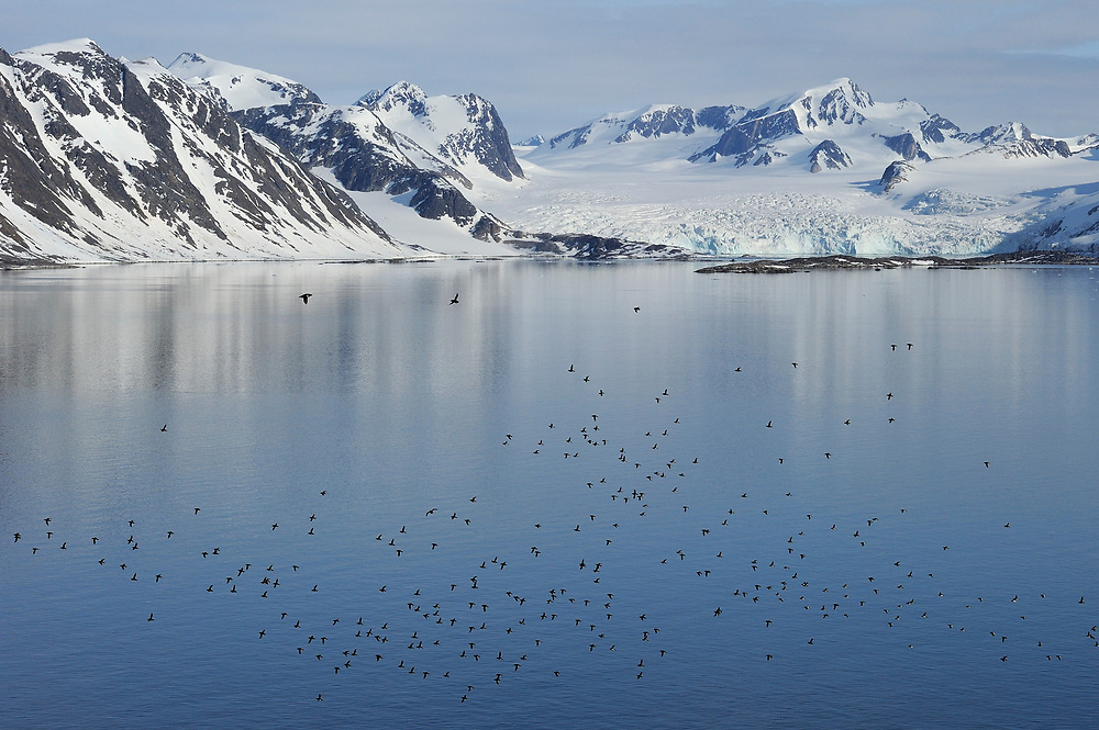 Arctic landscape with flying birds, Svalbard, Norway