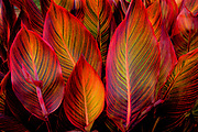 Glowing backlit striped leaves