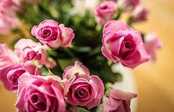 THEMENBILD - pinke Rosen zu einem Strauss gebunden, aufgenommen am 21. Mai 2019, Kaprun, Österreich // pink roses bound to a bouquet on 2019/05/21, Kaprun, Austria. EXPA Pictures © 2019, PhotoCredit: EXPA/ Stefanie Oberhauser