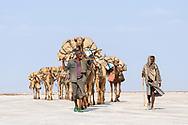 Salzkarawane von einheimischen Afar unweit des Vulkans Dallol in der Danakil Senke, 120 Meter unterhalb Normalnull, Region Afar, Äthiopien<br /> <br /> Salt caravan from local Afar not far from the Dallol volcano in the Danakil valley, 120 meters below sea level, Afar region, Ethiopia