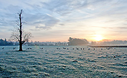 © under license to London News Pictures.  23/11/10 (Wed), Sheep graze on a frost covered field as the sun rises over a farmland near Pailton in Warwickshire. Picture caption should read Sam Spickett/London News Pictures