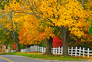 Fall Trees with Fence, Water Mill,  New York