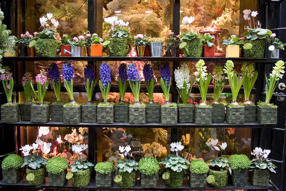 Florist shop window display, near Boulevard Saint Germain, Paris, France