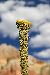 interesting desert plant in Abiquiu, New Mexico