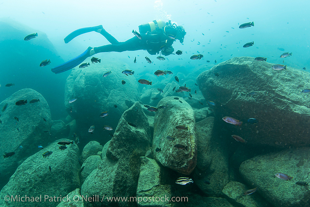 A scuba diver swims along the rocky shores of Lake Malawi, one of the largest and deepest lakes in the world and home to over 1,000 species of cichlids that exist nowhere else on Earth. Malawi, Africa.
