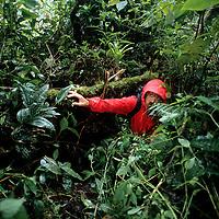 PERU.  John Catto (MR), hacks through upper Amazon cloud forest enroute to pre-Incan tomb above Rio Huabayacu.