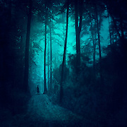 Man standing on a path in a misty forest