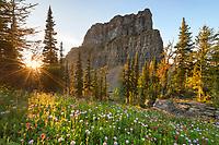 Wildflower meadows at sunset. Boulder Pass, Glacier National Park Montana