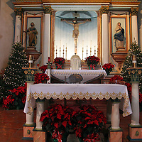 USA, California, Oceanside. Christmas Trees at Altar of Old Mission San Luis Rey de Francia.
