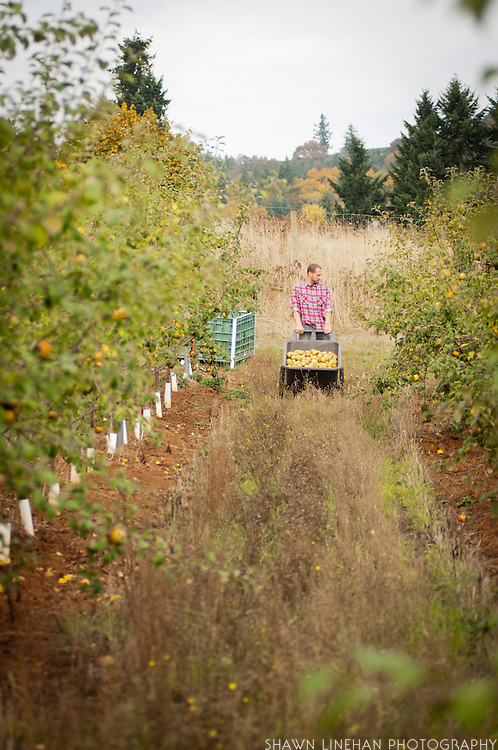 in the orchard at Wandering Aengus Cidery in Salem, Oregon.