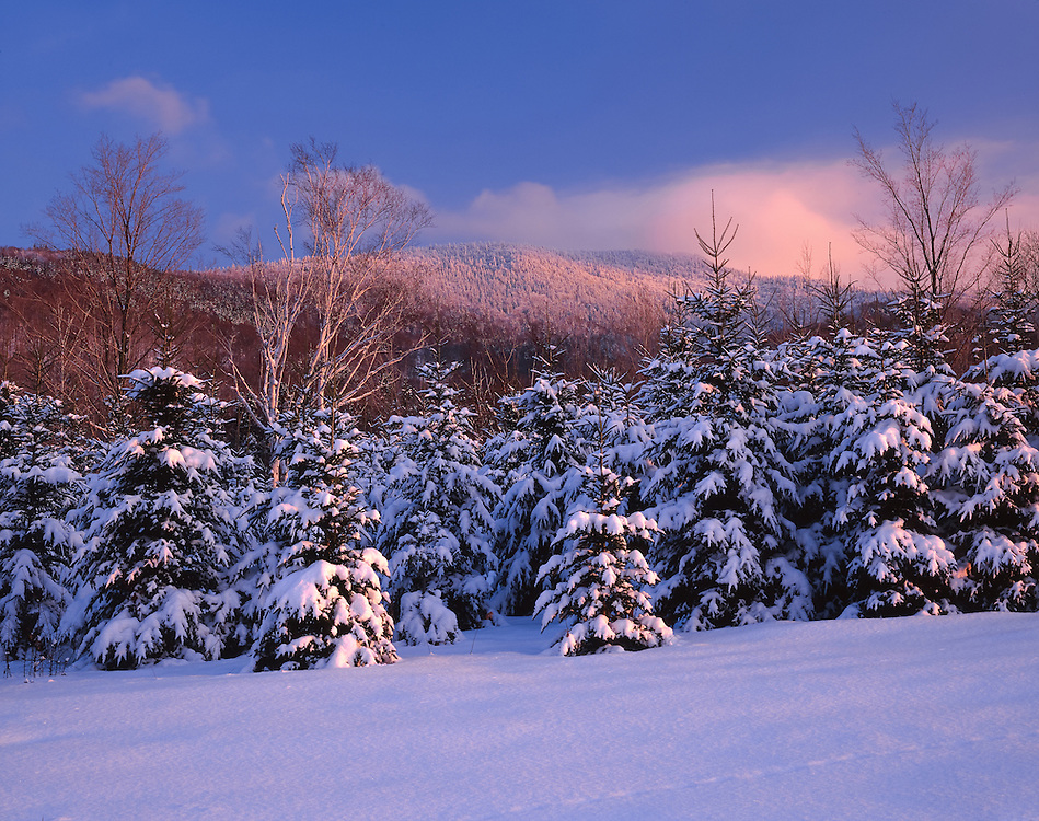 First light on snow covered spruce & snowy mountain tops, Jefferson, NH