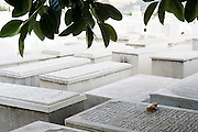 A fallen leaf rests on a Hebrew tombstone at the Jewish Cemetary in the old mellah, or Jewish quarter, in Fes, Moroco.