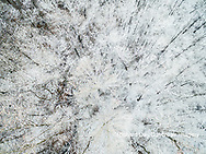 63808-03203 Aerial view of snow covered trees Marion Co. IL