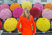 The owner of Wacky Suits with the flowers of the National Chrysanthemum Society. The opening day of the Chelsea Flower Show.