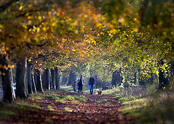 © Licensed to London News Pictures. 07/11/2020. Great Bookham, UK. People enjoy the warm sunshine on an autumnal walk near Polesden Lacy in Great Bookham, Surrey. Photo credit: Peter Macdiarmid/LNP