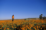 ANTELOPE VALLEY, CA:  A young woman walks among spring poppies in Antelope Valley, California.  Antelope Valley is the site of the California poppy reserve. (Model Released)